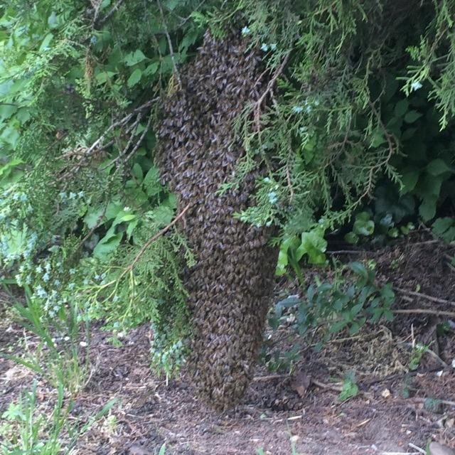 Elrajzott méhek