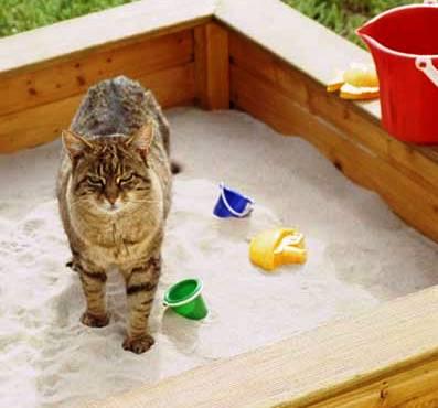 macska-homokozo